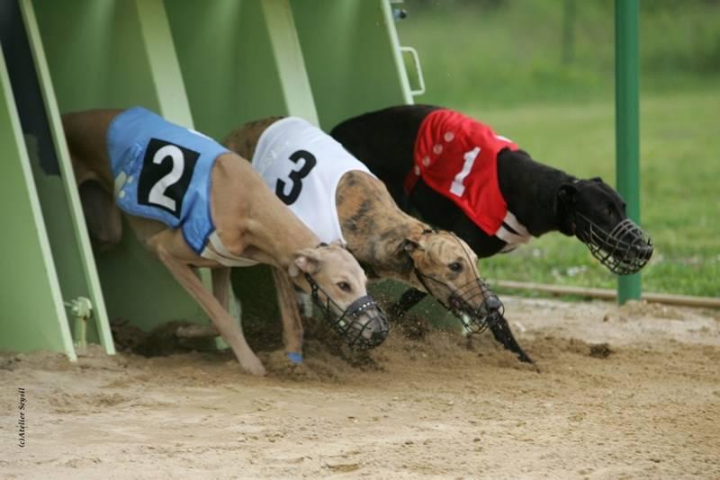 Chien de course - Tapis de course pour chien ...