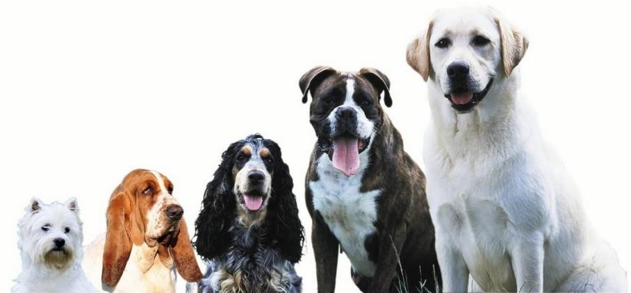 osteopathie canine à Montbazon