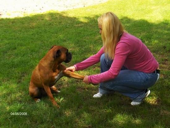 Ostéopathe pour Canins