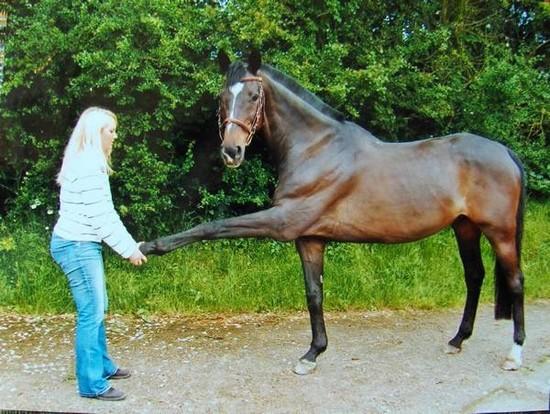 ostéopathe équin à Tours (Montbazon)