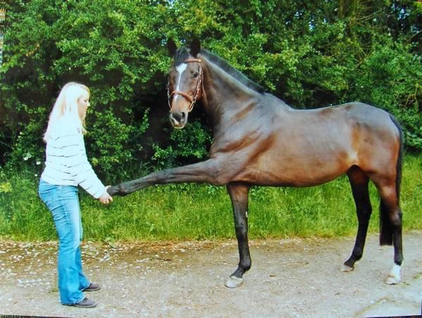 Ostéopathe pour Equins